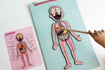 cuepro human magnetico janod niños